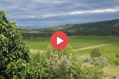 WineryforsaleNarbonneAudeSouthFrance